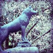 【ツンの銅像】西郷隆盛の愛犬、ツンの銅像。